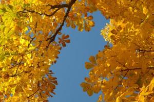chestnut-leaves-228072_1920